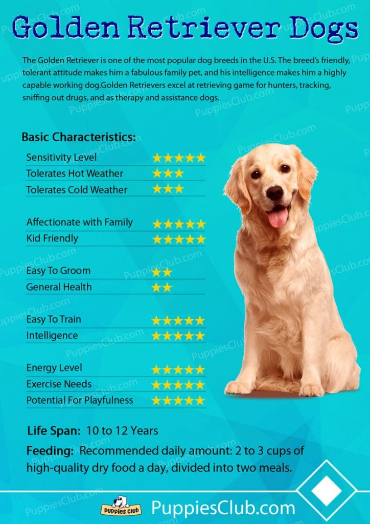 Good Dog Names For Golden Retrievers
