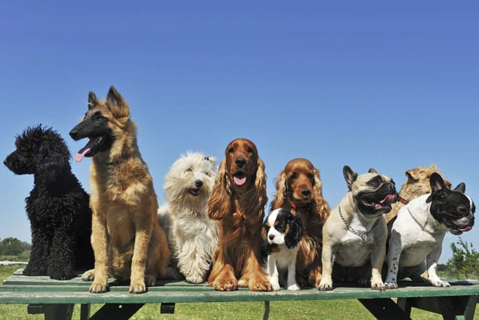 dog breed group