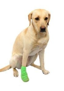 Arthritus in dogs