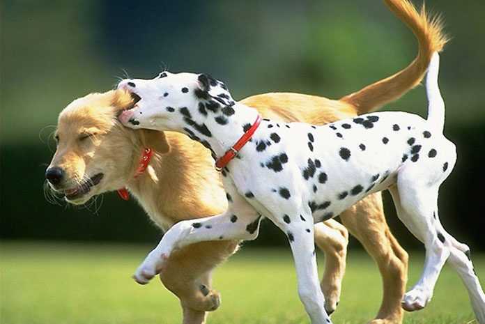 Common Dog Behaviors