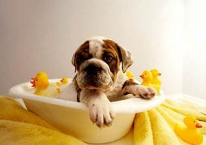 puppy bathing