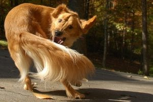dog-chase-tail