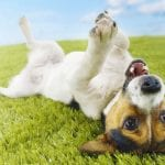 Top 10 Most Common Dog Health Problems