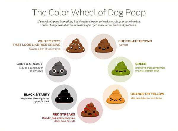 Dog Poop Color Meaning And Health Problem Signs Puppies Club