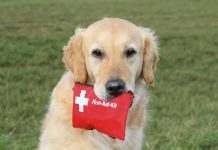 first aid for puppies