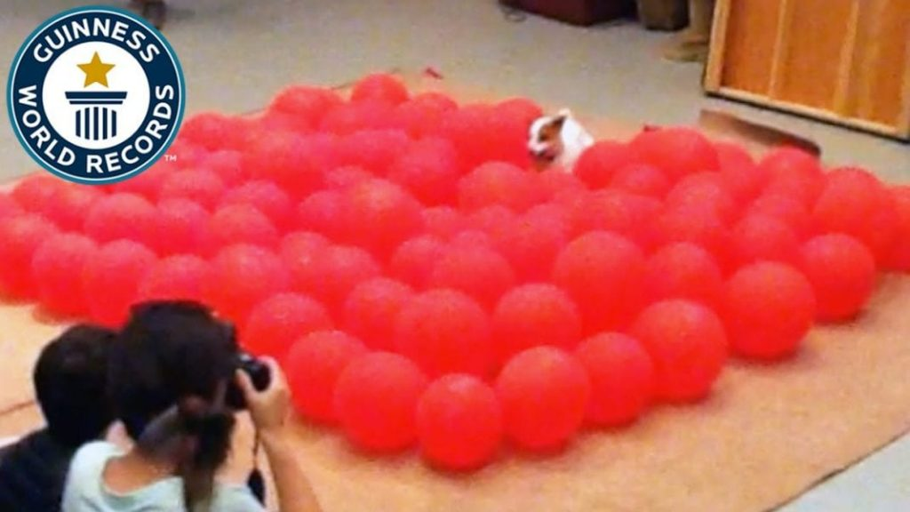 Twinkie The Balloon Popping Dog – Guinness World Records
