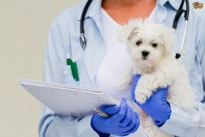 puppy health care