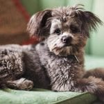 Top 10 Benefits of Having a Yorkshire Terrier