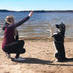 Dog Obedience Training Tips You Need To Know