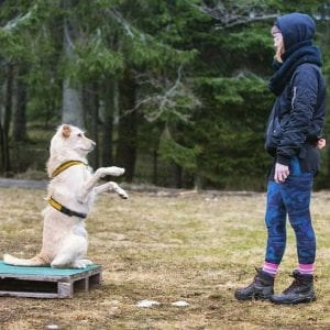 dog obedience training tips tricks