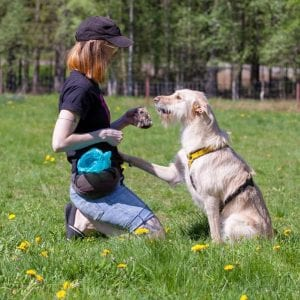 dog obedience training tricks