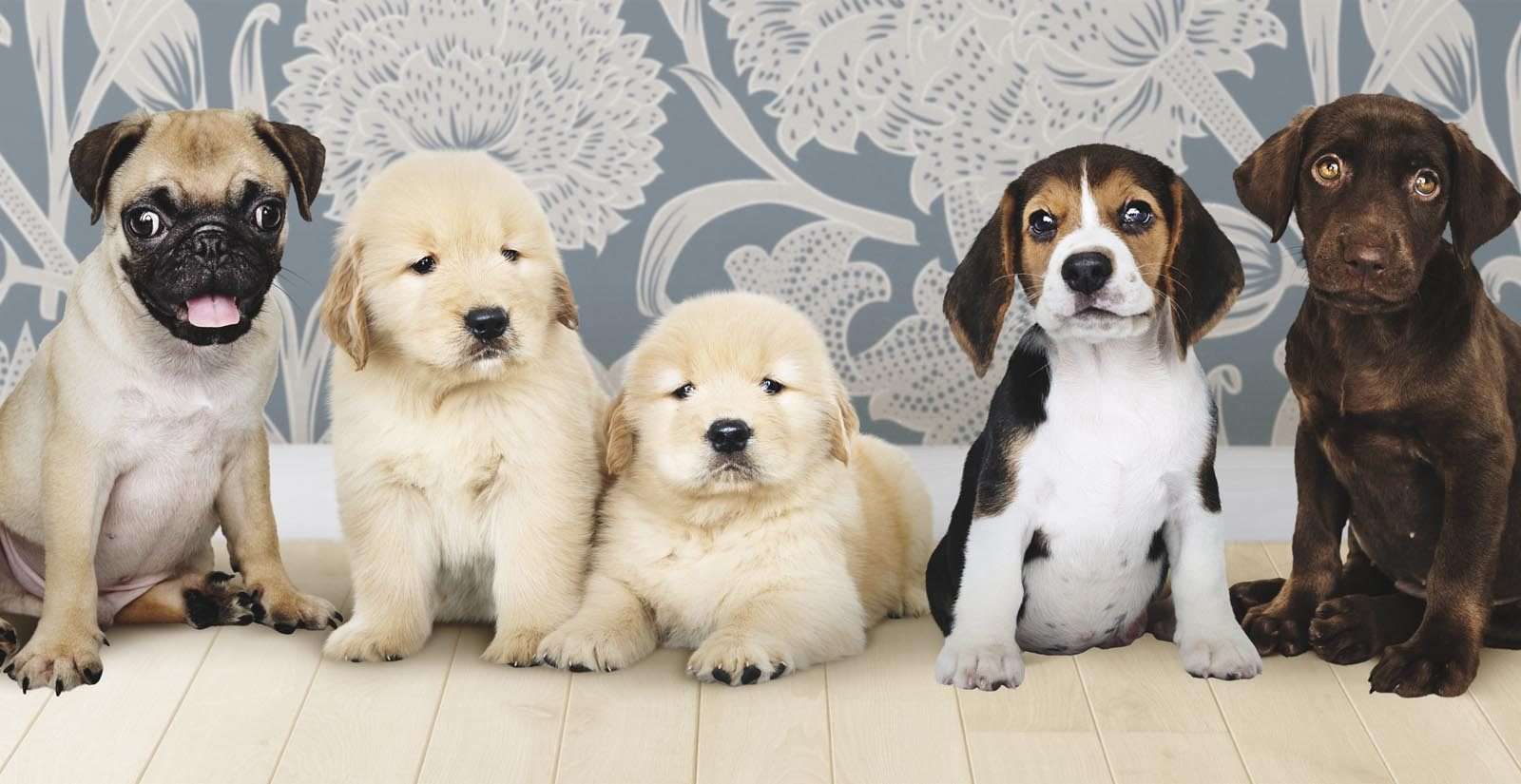 puppies club dog breeds min