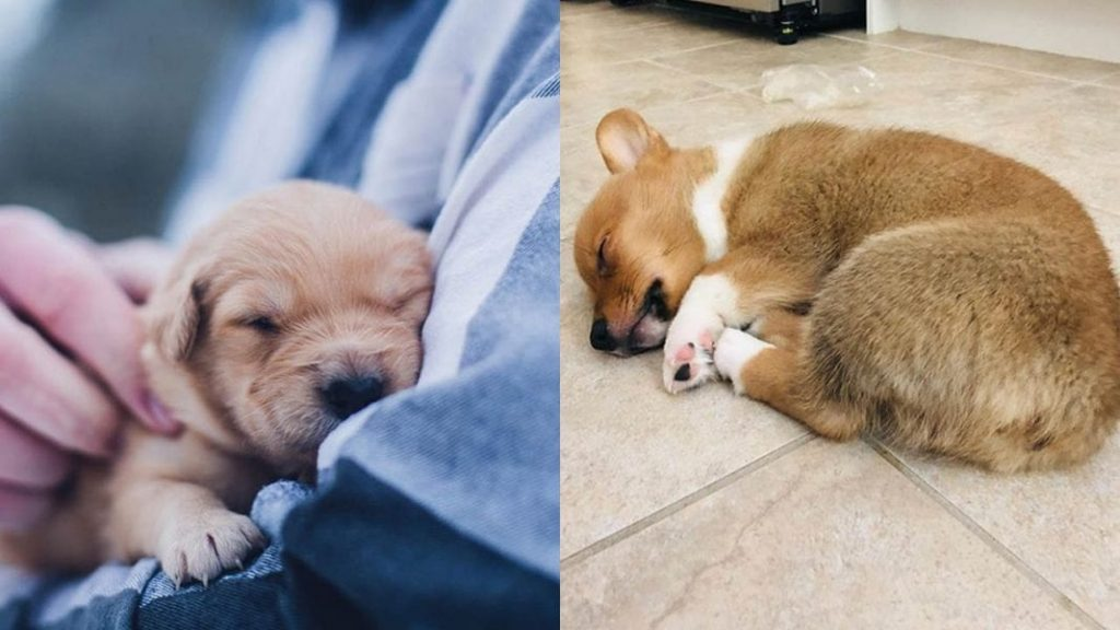 Dog Sleeping Positions Reveals His Personality