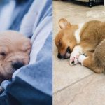 Dog-Sleeping-Positions