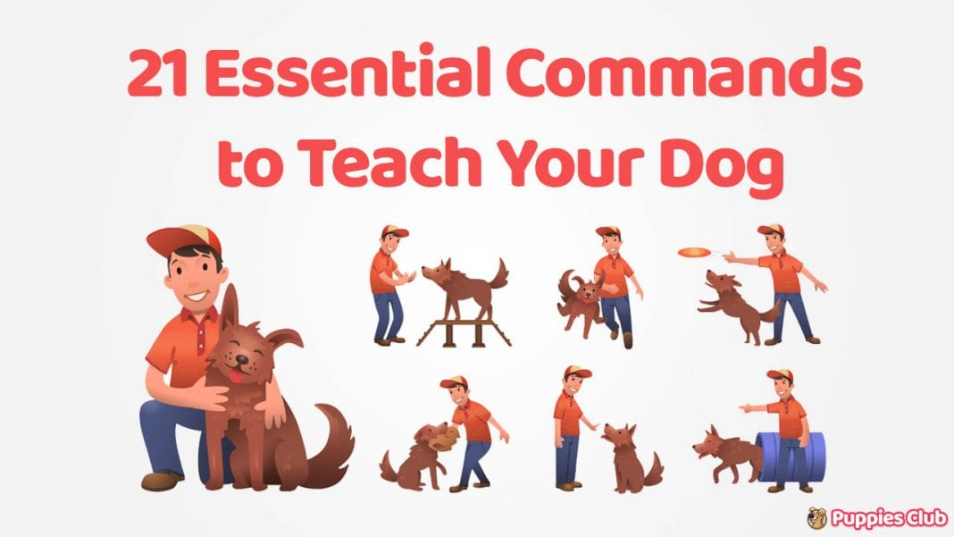 dog training commands to teach dog