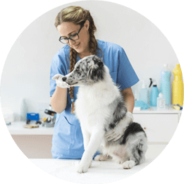 puppy care image