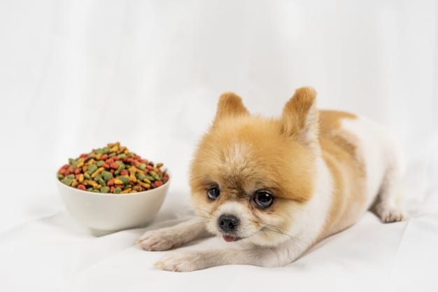 chicken-free-dog-food-brands