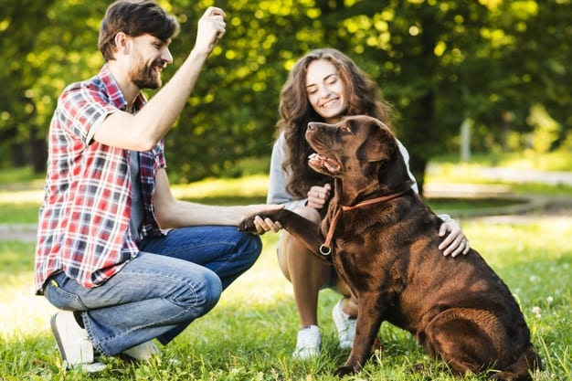 couple-playing-with-their-dog-park
