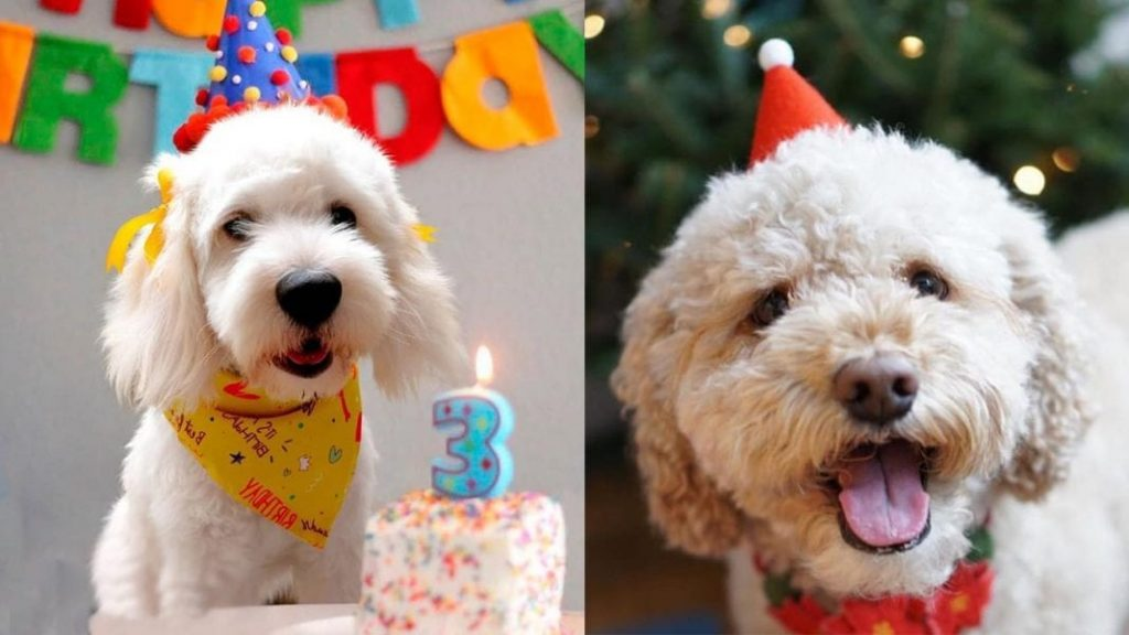 10 Ways to Celebrate Your Dog's Birthday